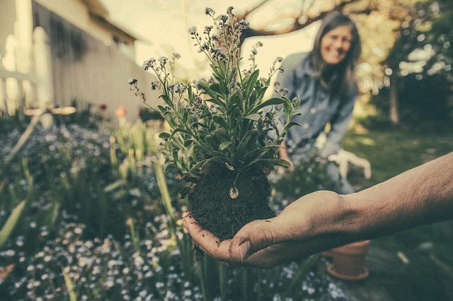 sadba rostlin lidé