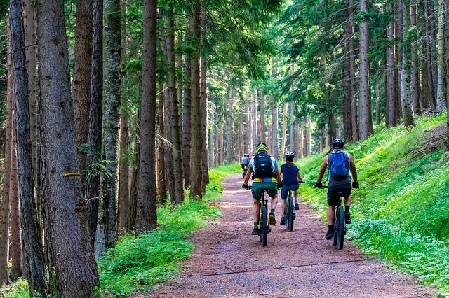 lesní cesta s turisty